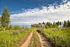 Trajeto rural através do campo e da floresta Fotografia de Stock