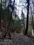 Trajeto sagrado através da floresta do pinho foto de stock royalty free