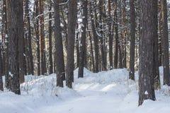 Trajeto snowcovered branco em uma floresta do pinho Fotos de Stock