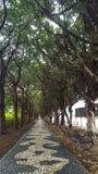 Trajeto Tree-lined Imagem de Stock