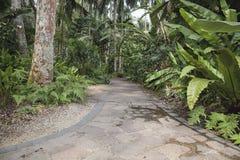 Trajeto tropical do jardim Fotos de Stock