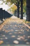 Trajeto urbano do outono fotos de stock