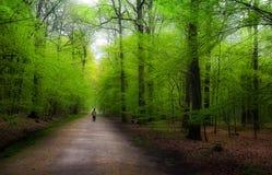 Trajeto verde Imagens de Stock