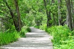 Trajeto verde da natureza Foto de Stock