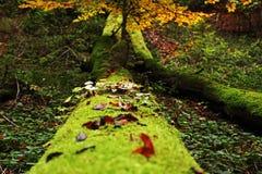 Trajeto verde na floresta Fotografia de Stock