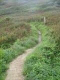 Trajeto verde, o lagarto, Cornualha Reino Unido Imagens de Stock Royalty Free