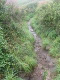 Trajeto verde, o lagarto, Cornualha Reino Unido Foto de Stock Royalty Free