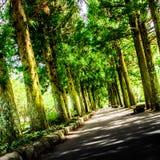 Trajetos à natureza e à tranquilidade fotos de stock