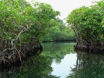 Trajetos da água através da selva, Panamá Fotografia de Stock Royalty Free