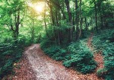 Trajetos de floresta Imagens de Stock Royalty Free