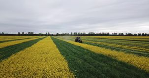 Traktor auf einem gelbgr?nen Rapsfeld stock video