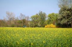 Traktor auf gelbem Feld im Frühjahr Stockbilder
