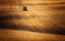 Traktor beim Sprühen von Feldern, wohin Mais steigt Stockbild