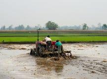 Traktor, der ein Reisfeld in Chitvan, Nepal pflügt Stockfoto