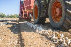 Traktor, der eine Zwiebelerntemaschine zieht Stockfoto