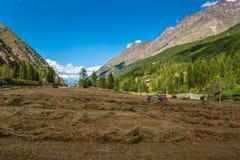 Traktor, der frisches Heu auf Wiese in den Alpen sammelt Lizenzfreie Stockfotografie