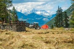 Traktor, der frisches Heu auf Wiese in den Alpen sammelt Stockfoto