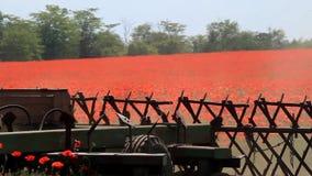 Traktor, der Mohnblumenfeld pflügt stock footage