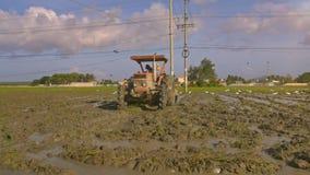Traktor-Fahrer-Ploughs Wet Rice-Feld-Vögel fliegen Peck Seed stock video