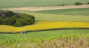 Traktor an Feld a lizenzfreie stockfotografie