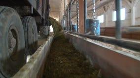 Traktor geht ringsum Futter im Bauernhof stock video