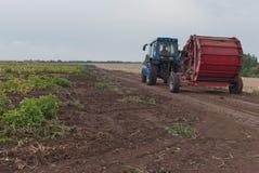Traktor i ett potatisfält royaltyfri foto