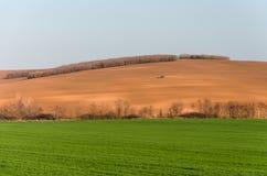 Traktor i fält Arkivbild