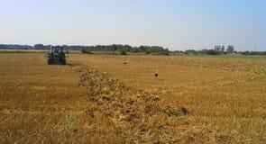Traktor i fält med storkar Royaltyfri Fotografi