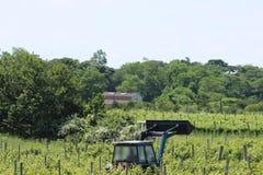 Traktor i vingård Arkivbild