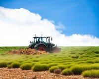 Traktor im Prozess des Lavendels fängt Bearbeitung auf Stockfoto