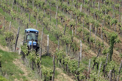 Traktor im Weinberg Lizenzfreies Stockbild