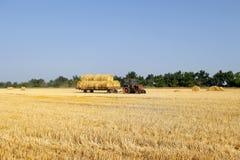 Traktor med hö Det bärande höet för traktor Baler av hö som staplas i vagnen royaltyfri fotografi