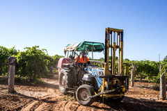 Traktor mit Belags-Maschine im Weinberg Stockfotos