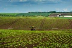 Traktor sockerbeta som besprutar Fotografering för Bildbyråer