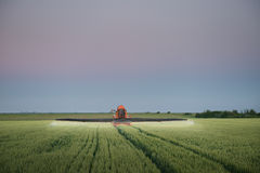 Traktor som besprutar vete Royaltyfria Bilder