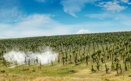 Traktor som besprutar vingården Arkivbilder