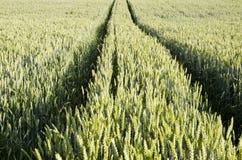Traktor spürt nach links auf dem landwirtschaftlichen Weizengebiet auf. Lizenzfreie Stockbilder