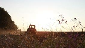 Traktor steht auf einem Gebiet der Schwarzerde bei Sonnenuntergang stock video