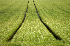 Traktor-track. The track of an agricultural vehicle in a field, focus in the center of the track Stock Photo
