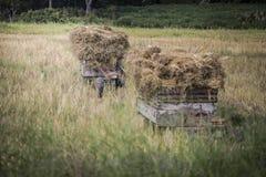 Traktor & trans. Fotografering för Bildbyråer