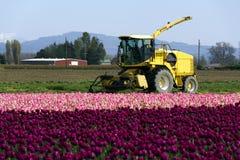 Traktor und Tulpen lizenzfreies stockbild