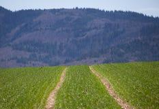 Traktorbahn auf Feld lizenzfreie stockfotos