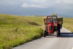 Traktoren bär hö på vägen i den nationella reserven Durmitor, Montenegro Royaltyfria Foton