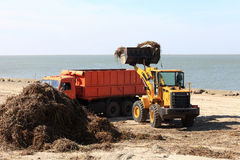 Traktoren laddar alger in i lastbilen Arkivfoton