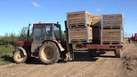 Traktorfahrer-Lastsbehälter mit geernteten Äpfeln zum Anhänger im Obstgarten 4K stock footage