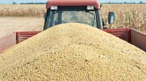 Traktorsläp med soybönan Arkivfoton