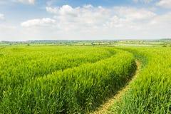 Traktorspår till och med ett fält Royaltyfri Bild