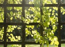 Traliccio con le piante Fotografie Stock