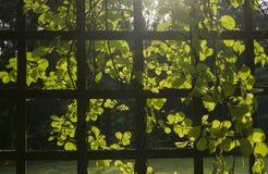 Traliccio con le piante Fotografia Stock Libera da Diritti