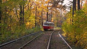 Tram in the autumn forest stock video footage